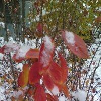 ...под снегом... :: марина ковшова