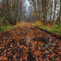 Осенний путь :: Владимир Самсонов