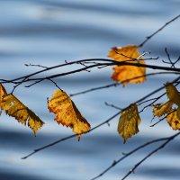 Осенние волны :: Юрий Муханов