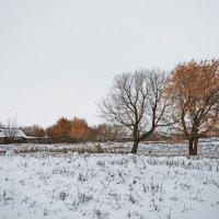 Первый настоящий снег - 2016-2017 :: Олег Помогайбин