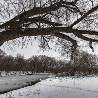 Зимняя осень :: Олег Помогайбин