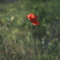 Одинокий :: Наталия Полибина