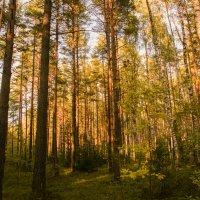 Последнее осеннее фото леса :: Екатерррина Полунина
