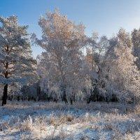 Утро морозное :: Анатолий Иргл