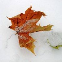 На белом белом покрывале октября. :: Инна Щелокова
