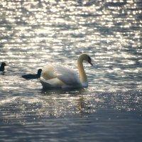 Лебединое озеро :: Ирина Лядова