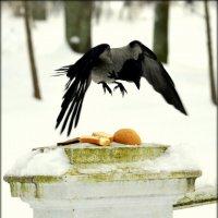 битва за хлеб  /3/ :: Сергей