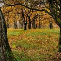 Октябрь в Загородном парке! :: Владимир Шошин