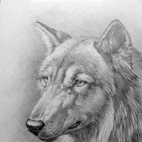 Волк рисунок карандашом :: rv76