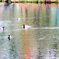 На озере :: Герович Лилия