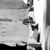 дворовые коты :: Алина