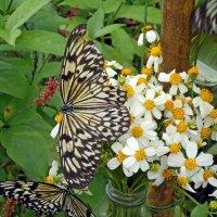 Бабочки :: Вера Щукина
