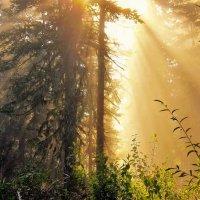Утренняя экспансия солнца :: Сергей Чиняев