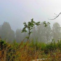 Молчание лесной лиры :: Сергей Чиняев