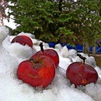 Первый снег :: дмитрий гуринович