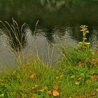осенние травы :: Елена