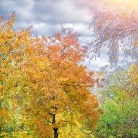 Вот и осень :: Таня Харитонова