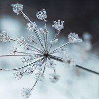 И снова нас посетил ледяной дождь. Уже похоже на традицию :: Juls Juls