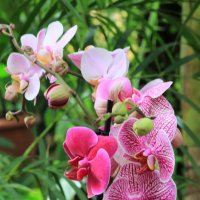 Орхидеи :: Анатолий Шумилин