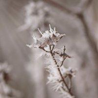 цветы ноября :: Svetlana Plasentsiia