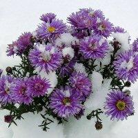 Укрыты снежным покрывалом :: Павлова Татьяна Павлова