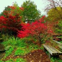 Осень в парке цветов (серия) :: Nina Yudicheva
