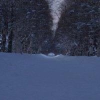 зима... утро... :: Alexandr Staroverov