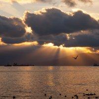 Рассвет и чайка :: Игорь Гарагуля