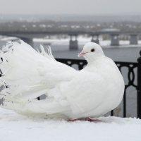 Серым ноябрьским днём :: Валерий Чепкасов