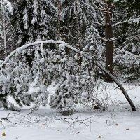 Снежный ноябрь :: Милешкин Владимир Алексеевич