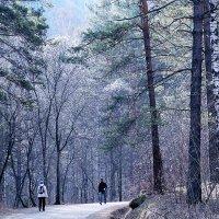Дорога в заповедник через ущелье Лалетина :: Екатерина Торганская