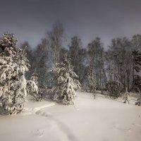 Околдован лес стоит, чудной жизнью он блестит 3 :: Сергей Жуков