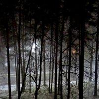Ноябрь ночью :: Юрий Владимирович 34