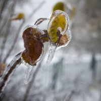 Ледяное молчание :: Антон Бабалян