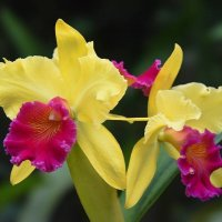 Orquideas :: Edgar Diaz