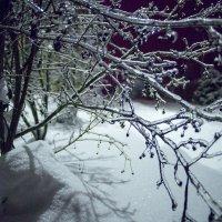 Зима пришла внезапно :: Руслан Гончар