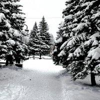 Вроде зима пришла. :: Sergey Serebrykov