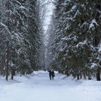 Зима в ноябре :: Aнна Зарубина
