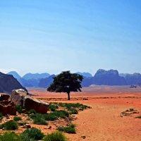 Вади Рам – марсианская пустыня в Иордании... :: Валентина Потулова