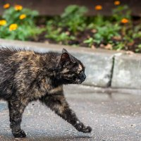 Просто кошка :: Роман Бровченко