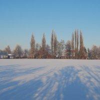 Тень на снегу :: Евгений Сладкевич