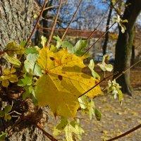 """""""Устало все кругом: устал и... желтый тот листок, что наконец свалился..."""" :: Galina Dzubina"""