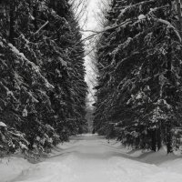 Снежная аллея :: Aнна Зарубина