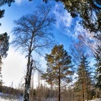 В зимнем лесу. :: Вячеслав Ложкин