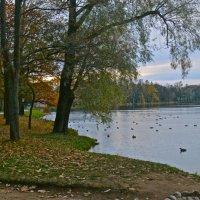 Большой пруд осенью :: Елена