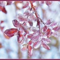 Красота ноября. :: Марина Никулина