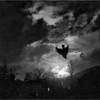 ...на закате... :: Беспечный Ездок