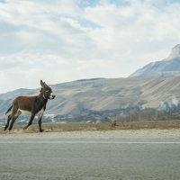 скачущий ослик :: Евгений Khripp