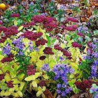 Разноцветье осени :: Маргарита Батырева