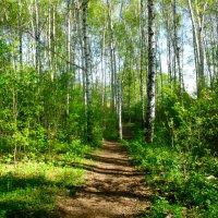 В лесу 2 :: Вячеслав Баширов